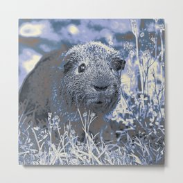 blue guinea pig Metal Print