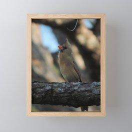 Beautiful female cardinal #2 Framed Mini Art Print