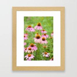 Pink Echinacea Wildflower Framed Art Print