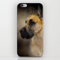 great dane iPhone & iPod Skins featuring Dashing Great Dane by Jai Johnson