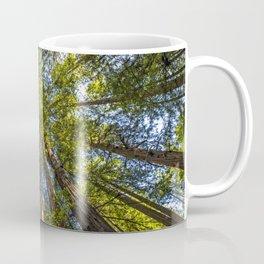 Coastal Redwoods aka Coast Redwood and California Redwood (Sequoia sempervirens) Coffee Mug