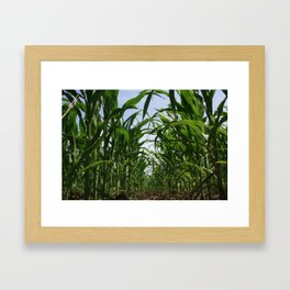 Corn Row Framed Art Print