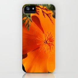 Brilliant California Poppy iPhone Case
