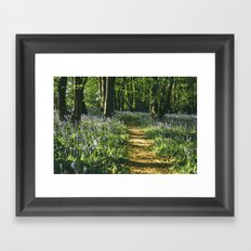 Path through wild Bluebells in ancient woodland. Wayland Wood, Norfolk, UK. Framed Art Print