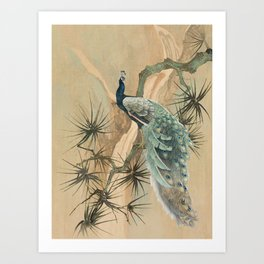 Peacock In The Pines Art Print