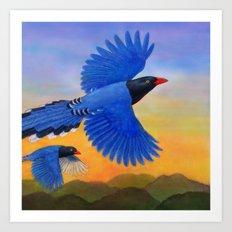 Taiwan Blue Magpie(1) Art Print