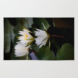White Lily Flowers In A Pond With Green Lily Pads Rug