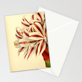 Flower brunswigia magnifica 17 Stationery Cards