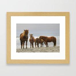 Wild Ponies On The Beach  Framed Art Print
