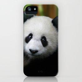 Giant Panda Cub iPhone Case