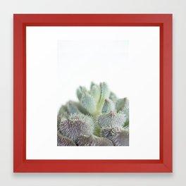 Succulent III Framed Art Print