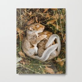 Two baby squirrels cuddling as they sleep Metal Print