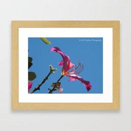 Against Blue Framed Art Print
