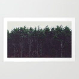 Transit Photo Series: Tree Line Art Print