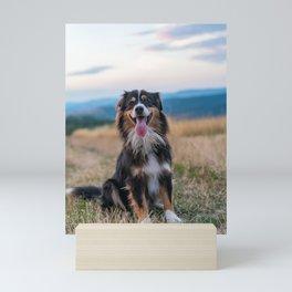 Australian Sheep Dog Mini Art Print