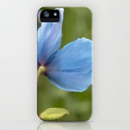 Meconopsis Poppy iPhone Case