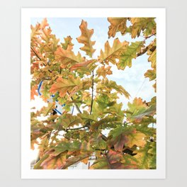 Bright Autumn Glow Art Print