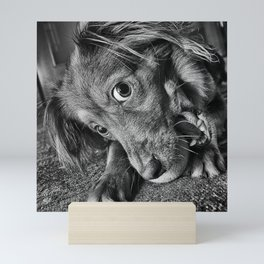 Dog playing with his ball Mini Art Print