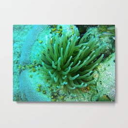 Under water plants Metal Print