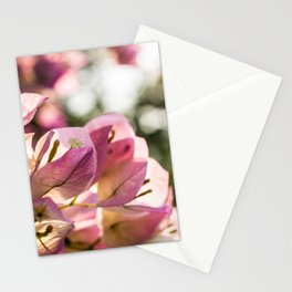 Pink Bougainvillea Stationery Cards