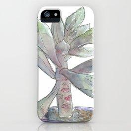 Echeveria Hybrid 1 iPhone Case