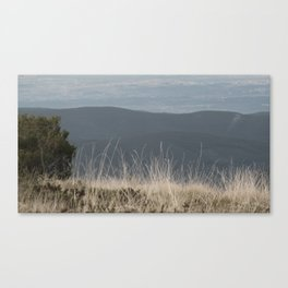 Straw Canvas Print