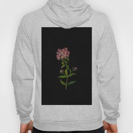 Phlox Undulata Mary Delany Vintage British Floral Flower Paper Collage Black Background Hoody
