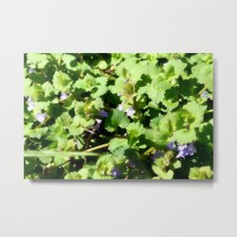 Ground Ivy 07 Metal Print