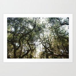 Among the Trees Art Print