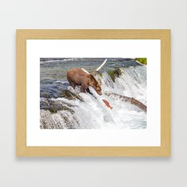 Grizzly bear face to face with salmon Framed Art Print