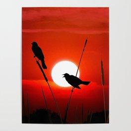 Blackbirds On Red Sunset. Poster