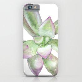 Succulent 6 iPhone Case