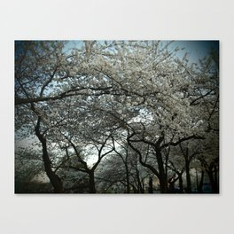 Cherry Blossoms III Canvas Print