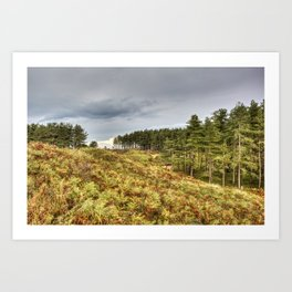 Whiteford Burrows Nature Reserve Art Print