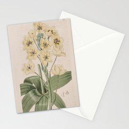 Flower 305 ornithogalum thyrsoides flavescens Pale yellow thyrse flowering Star of Bethlehem13 Stationery Cards