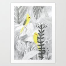 Calopsittes Art Print