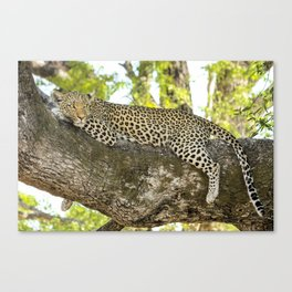 A Leopard's Gaze Canvas Print