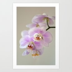 orchid close up Art Print