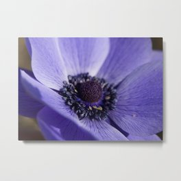 Blue Crown Anemone Metal Print