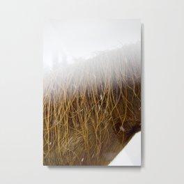 Sleet, Mane & Fog Metal Print