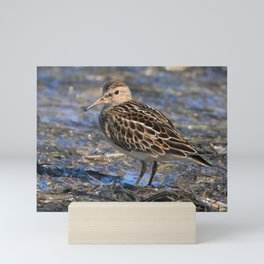 Party with Pectoral Sandpipers Mini Art Print