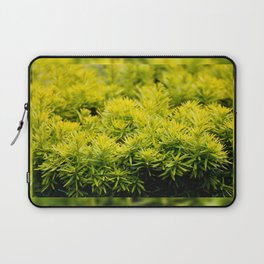 Taxus baccata Yew new shoots Laptop Sleeve