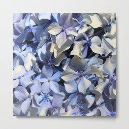 Blue Hydrangea flower Metal Print
