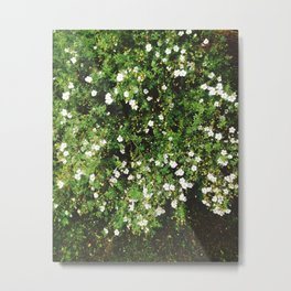 Spring is coming! Metal Print