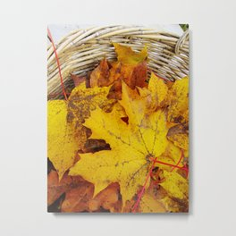 Yellow leaf in a basket Metal Print