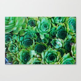 some kind of cactus 1 Canvas Print