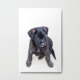 They Call It Puppy Love Metal Print