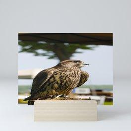 Falcon. Mini Art Print