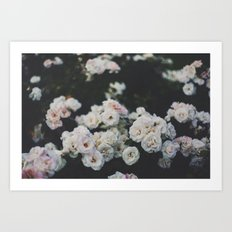 Cold Roses Art Print