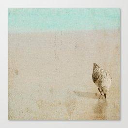 Sandpiper Canvas Print